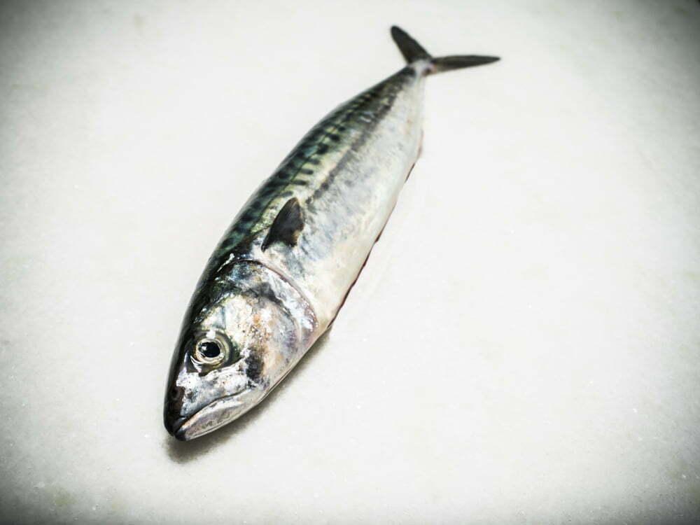Pescado para el Verano